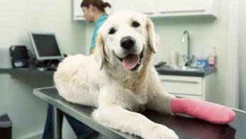 Auxiliar de Fisioterapia e Reabilitação Animal