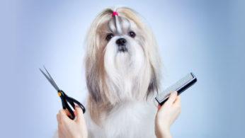 Tosquia e grooming