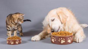 nutrição e alimentação animal